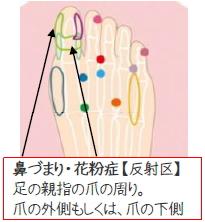 鼻づまり・花粉症 反射区